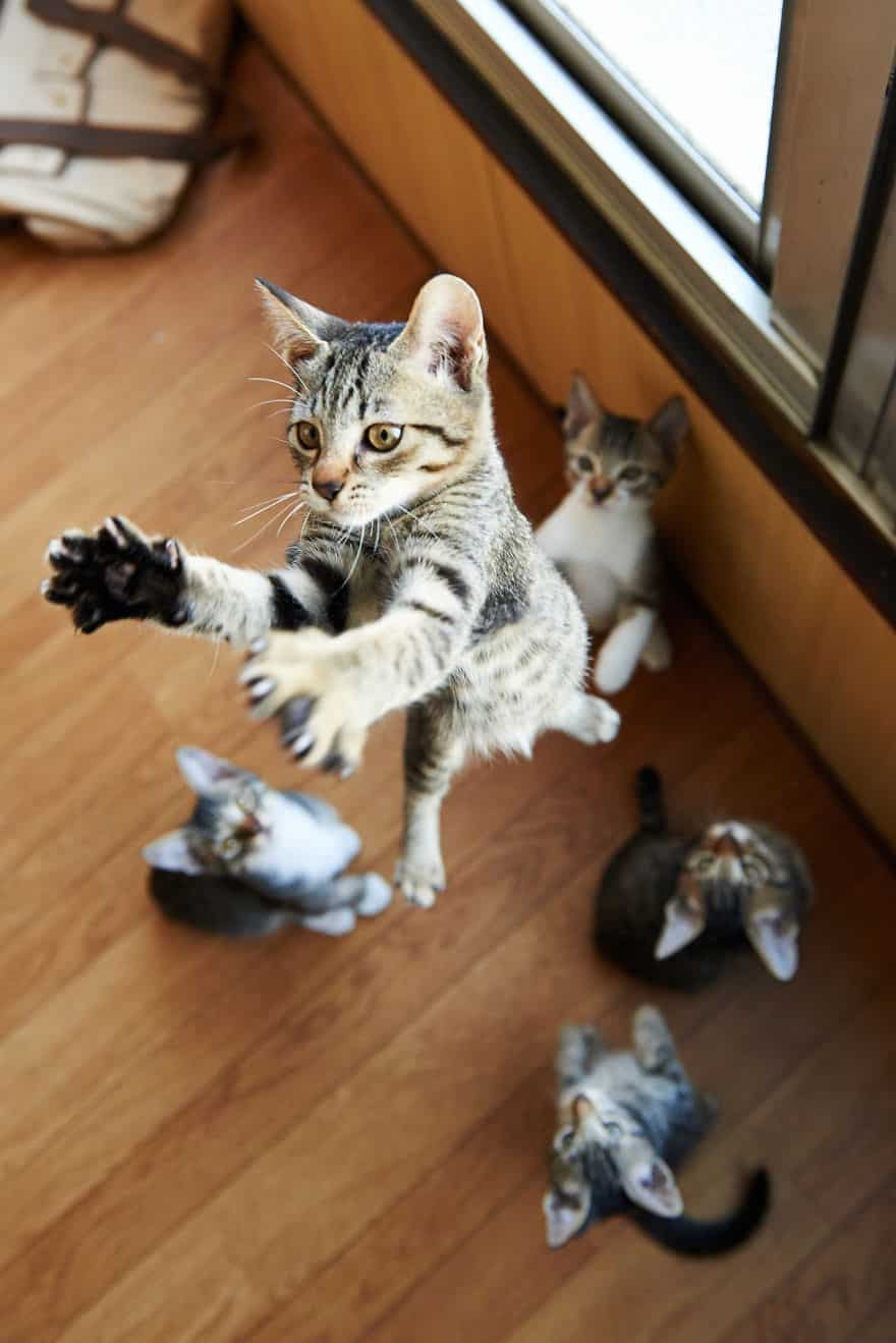 52 Jumping Cats At Play Look Like Ninjas Designbump