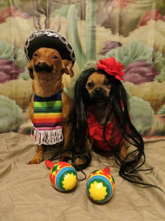 60 Spooky And Cute Halloween Costumes For Pets -DesignBump