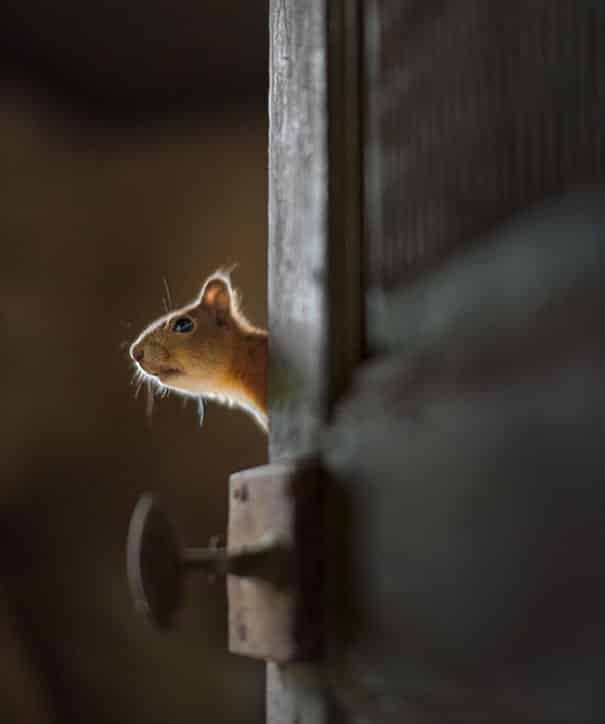 20 Photos Of Wild Animals Taking Over Abandoned House In