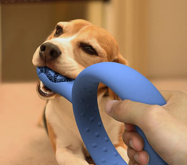 A toothbrush that doubles as a dog toy.