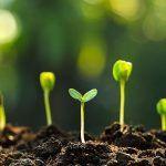 Garden Seeds - winter garden tips