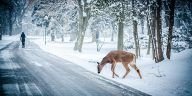 amazing winter pictures - Amazing Pictures of Winter