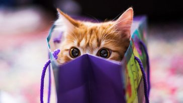 Adorable Cat Gifts for Cat Lovers
