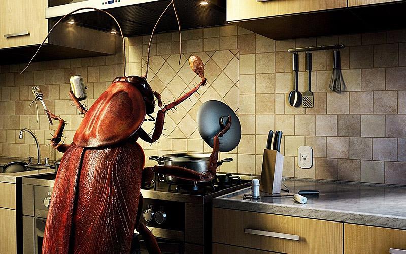 New Kitchen Ideas 2017 : Kitchen Design Ideas