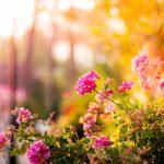 Garden Planter Tutorials and Designs