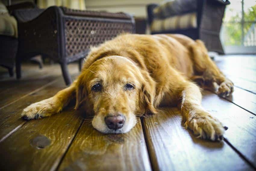 Figo Pet Insurance 1