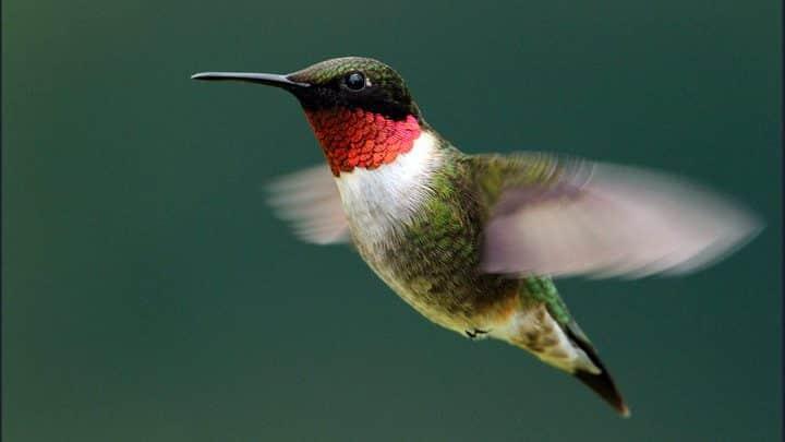 Bird10 All About Birds